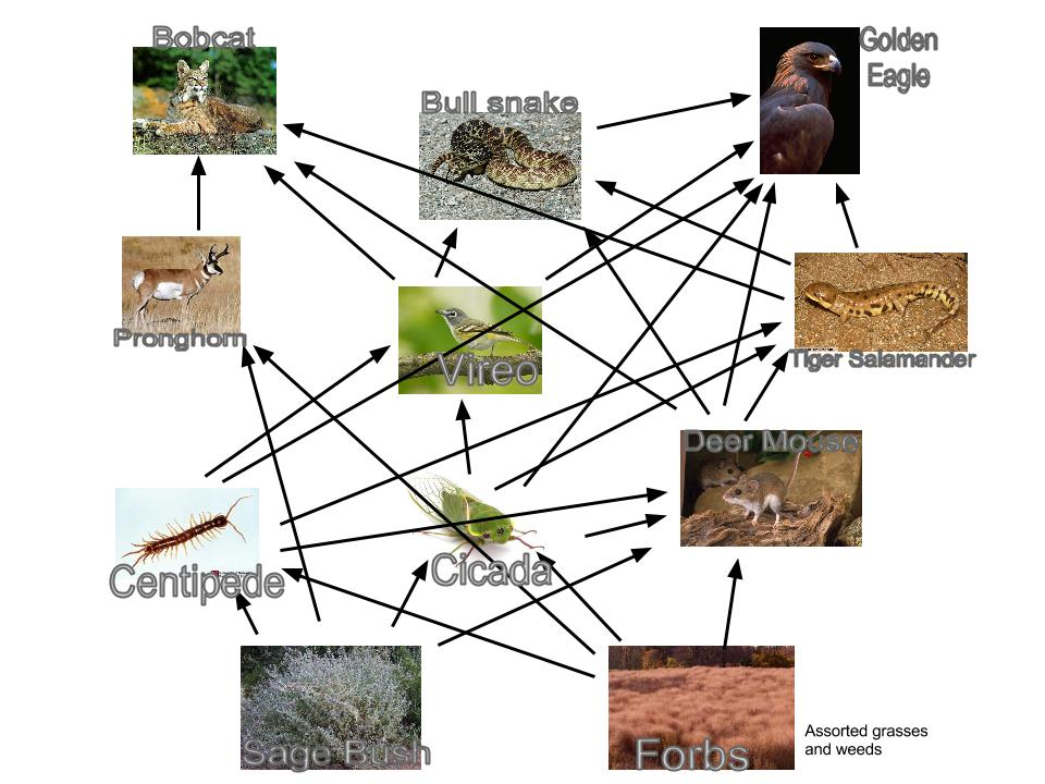 "Search Results for ""Food Web For Rainforest"" – Calendar 2015"